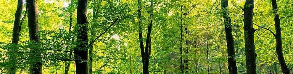 Construire bois_développement durable